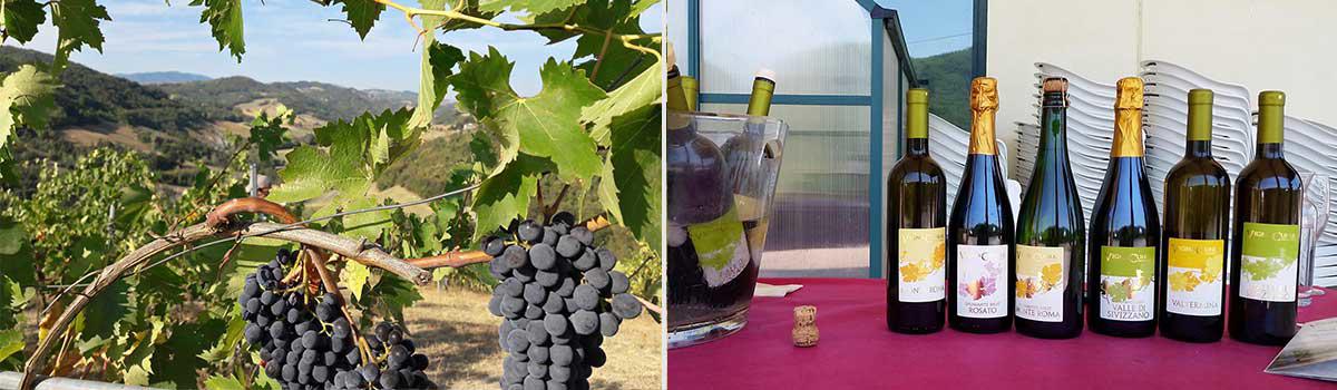 Agrobiodiverso vino biologico
