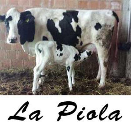 Picture for manufacturer La Piola