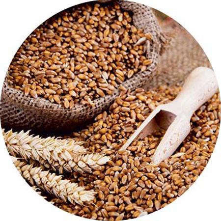 Immagine per la categoria Cereali